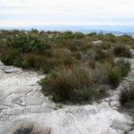 Tafelberg Nationalpark