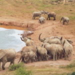 Addo Elephant Nationalpark