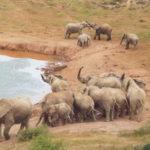 Addo Elephant Nationalpark
