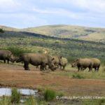 Hluhluwe-Umfolozi Nationalpark