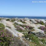 West Coast Nationalpark